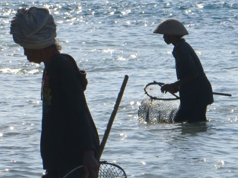 bali seaweed farming