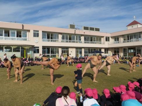 sumo japanese teaching kindergarten