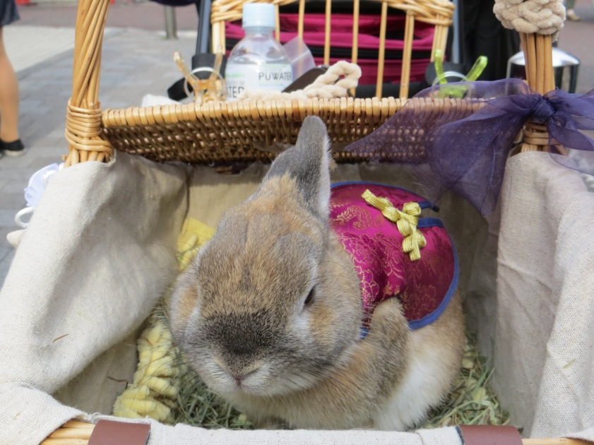 rabbits yokohama chinatown