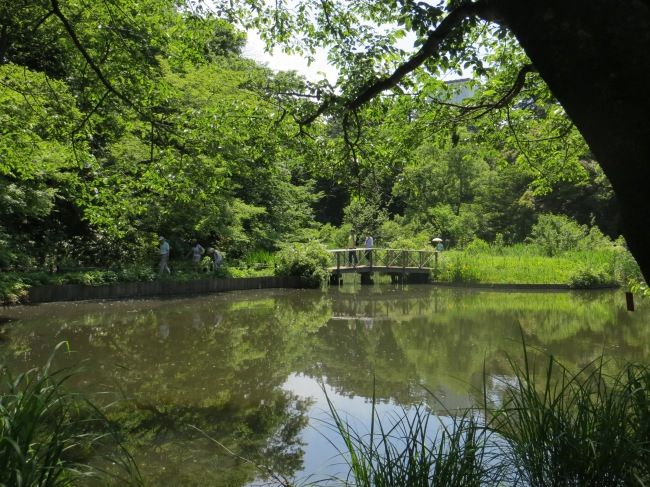 Institute for Nature Study, Tokyo