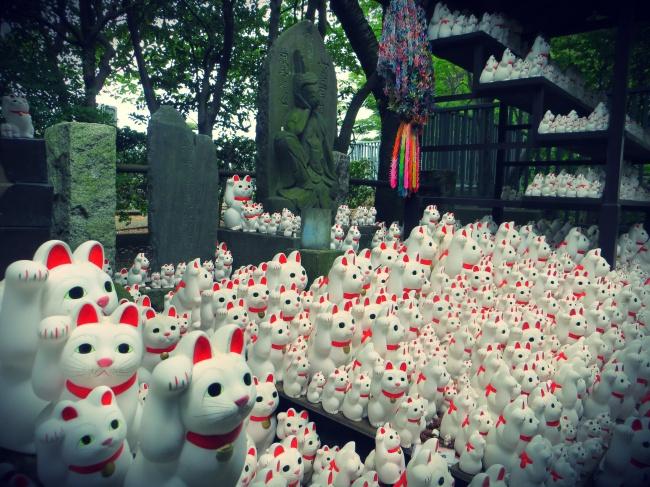 tokyo gotokuji japan cats temple