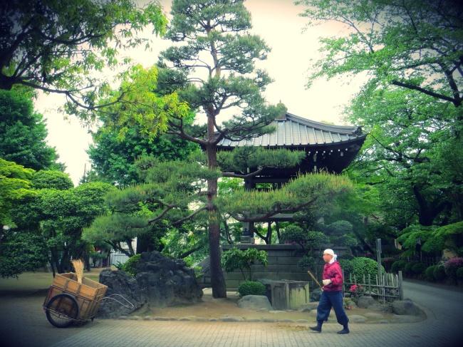 tokyo gotokuji temple cats