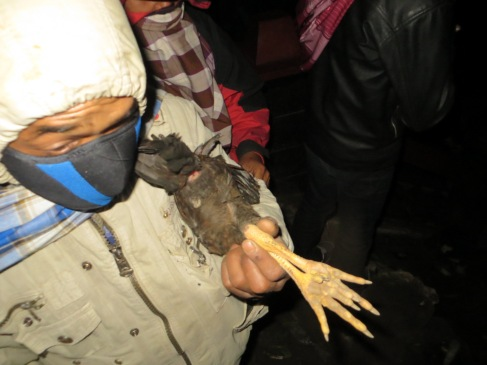 A man holds a live chicken ready to throw it into the volcano.