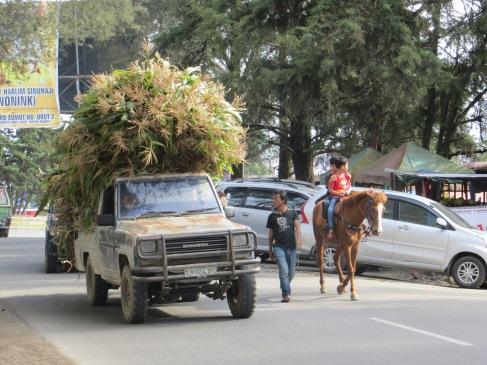 bersatagi sumatra