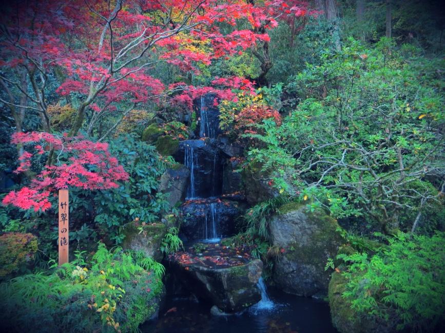japan autumn leaves takao