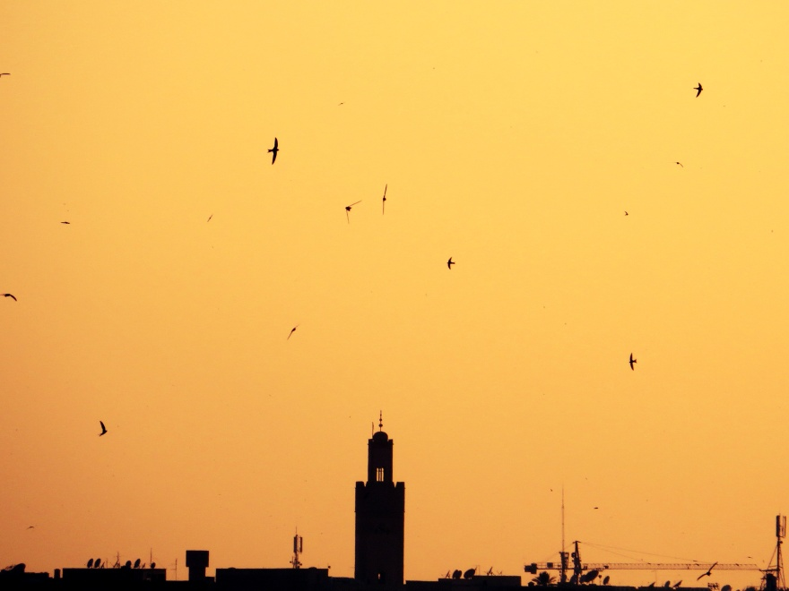 swifts marrakech