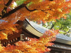 autumn-japan-ikimasho-8