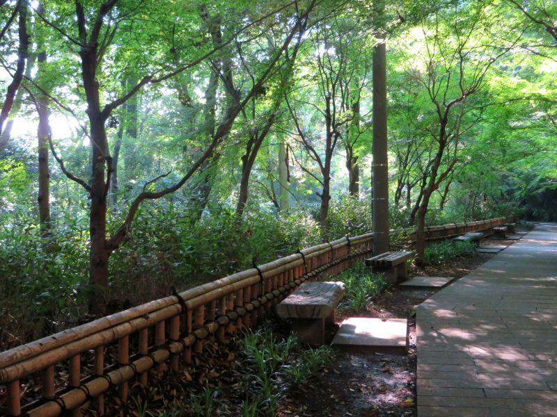 Jindaiji forest vibes