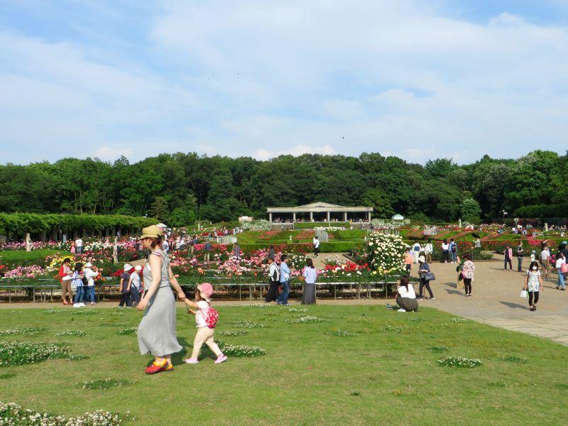 Jindaiji gardens
