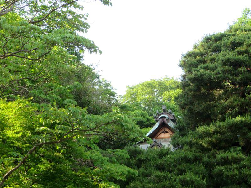 Jindaiji Temple trees