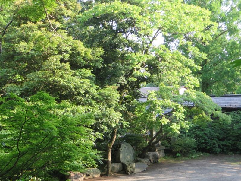 Jindaiji Trees