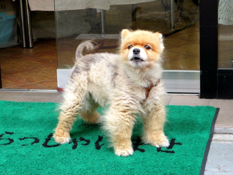 Dog Akabane tokyo