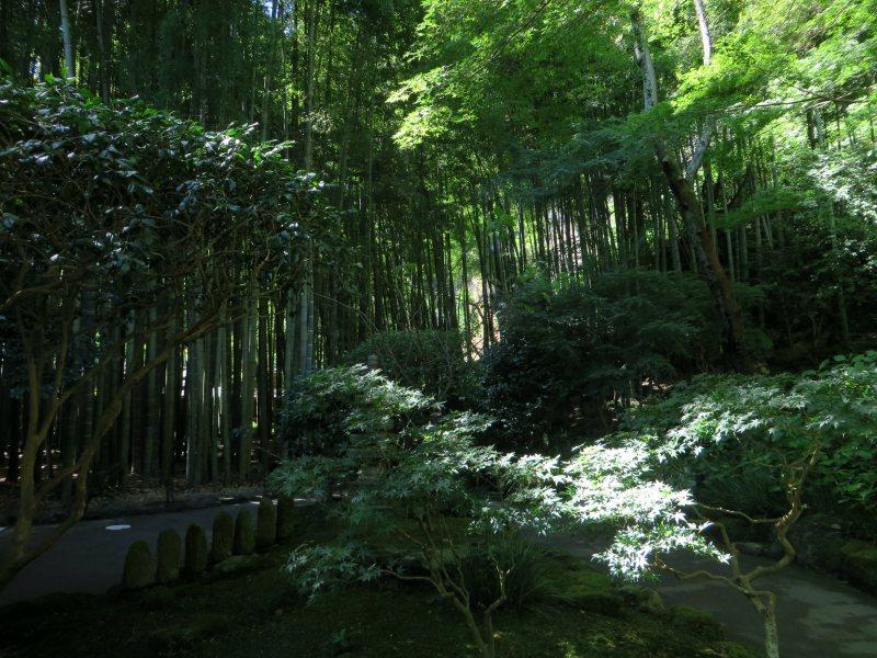 Hokokuji Bamboo Kamakura 6