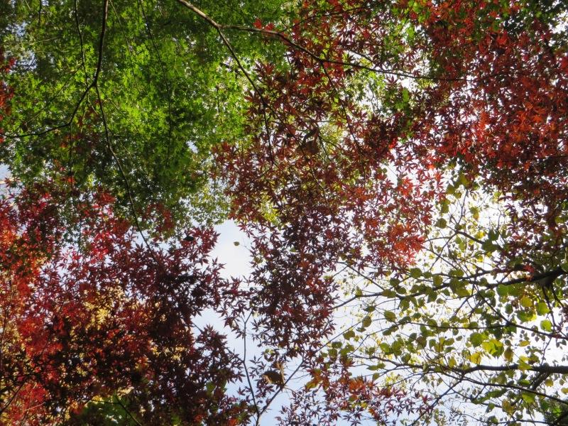 Todoroki Valley Tokyo Autumn Fall 2