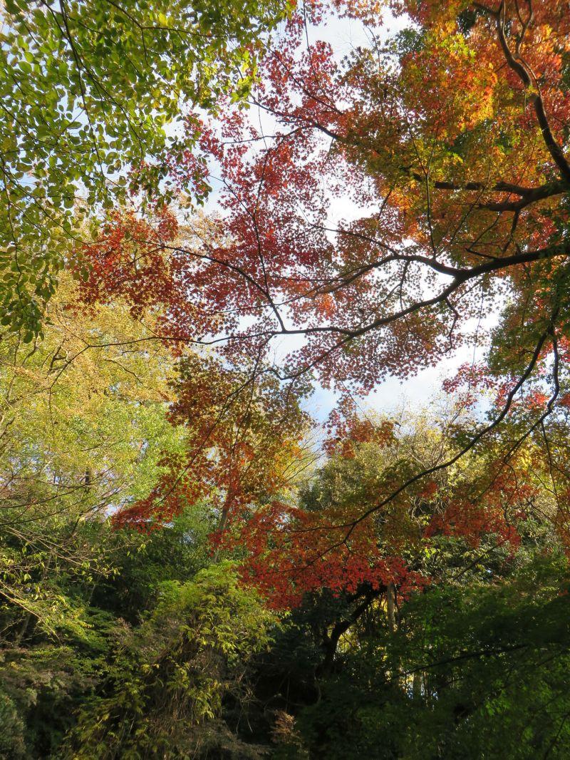 Todoroki Valley Tokyo Autumn Fall 3
