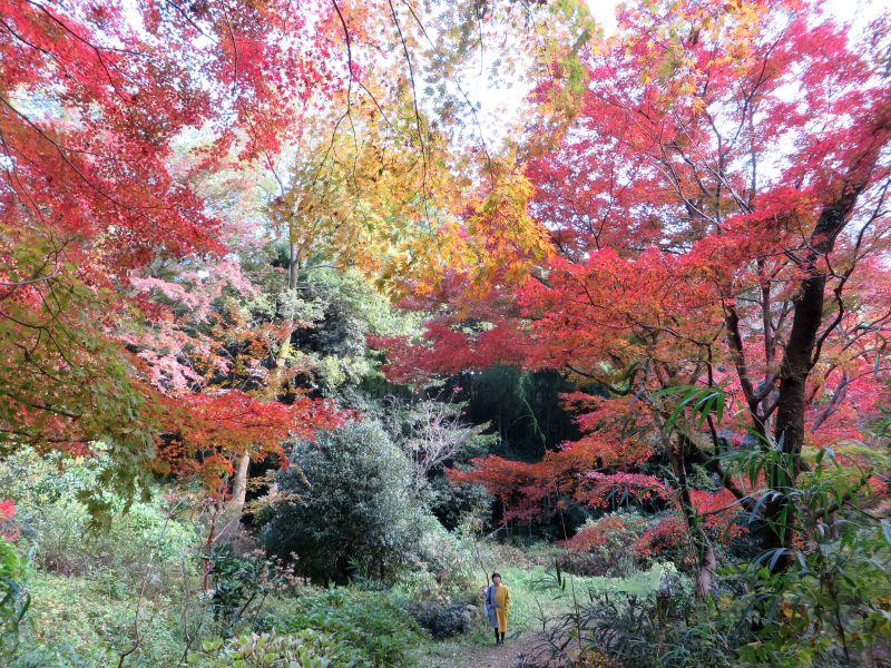 Todoroki Valley Tokyo Autumn Fall 6 Justin Egli