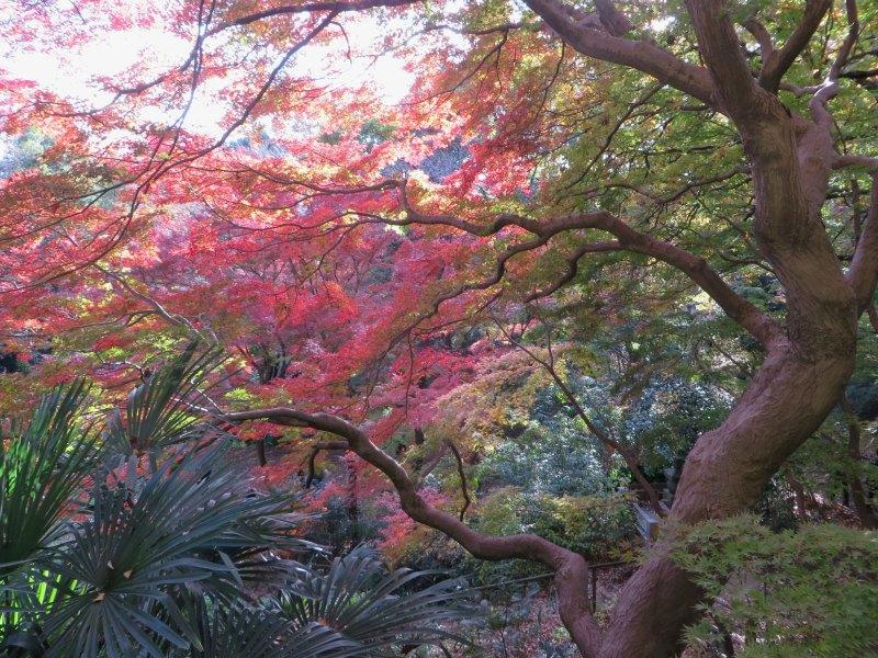 Todoroki Valley Tokyo Autumn Fall 7