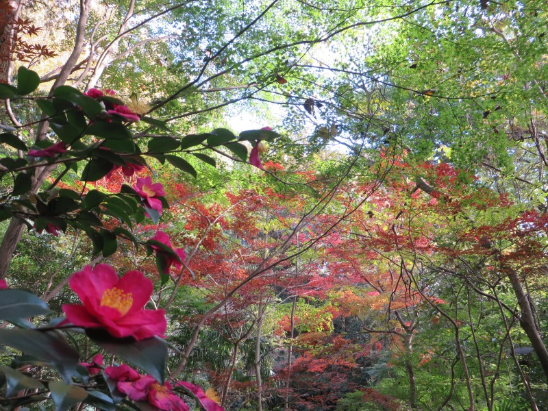 Todoroki Valley Tokyo Autumn Fall