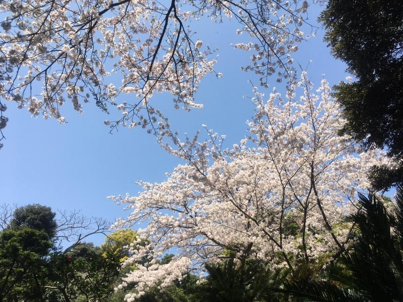 Enoshima Tokyo 15