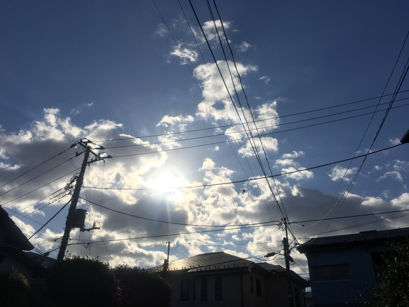 Ikuta Ryokuchi Park 生田緑地 15