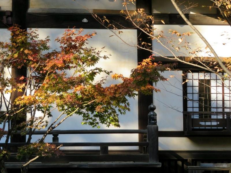 Fall Colours Tokyo
