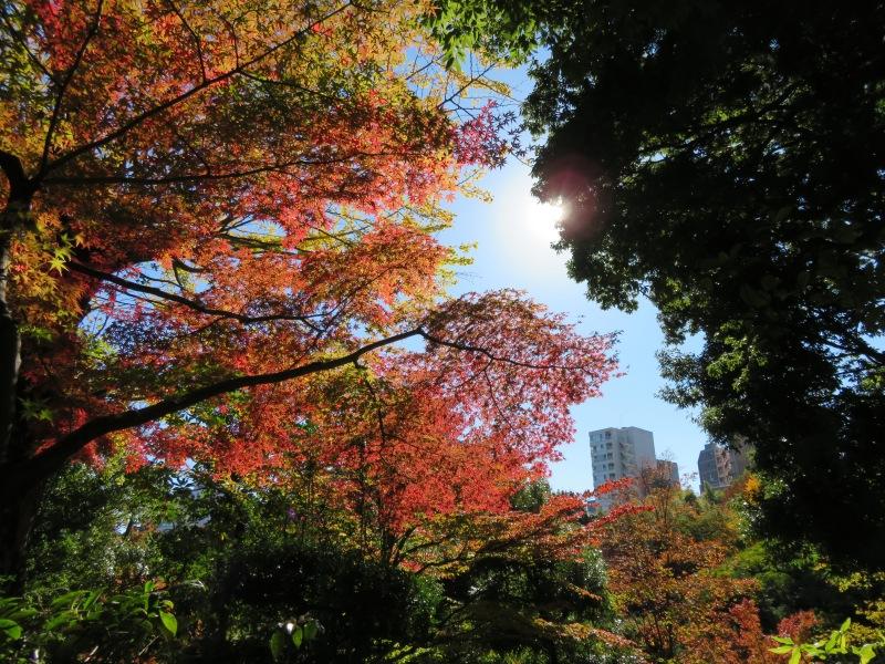Nezu Garden Museum Tokyo 2 Autumn Fall