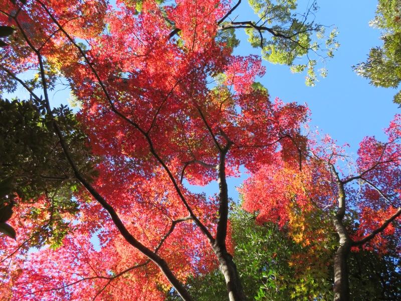 Nezu Garden Museum Tokyo 3 Autumn Fall