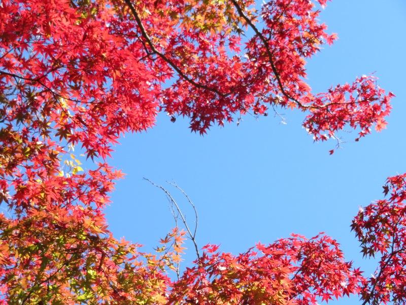 Nezu Garden Museum Tokyo 5 Autumn Fall