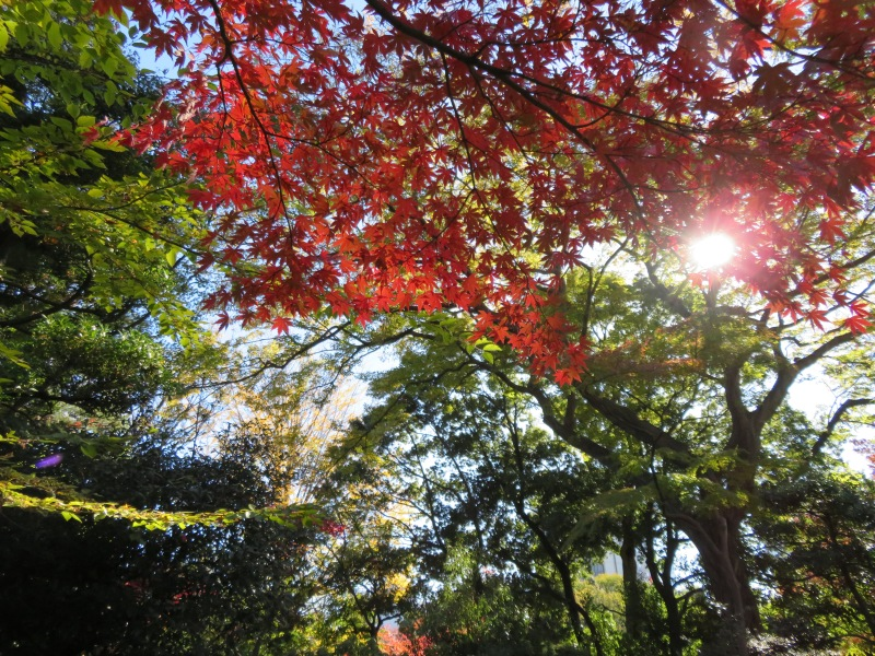 Nezu Garden Museum Tokyo