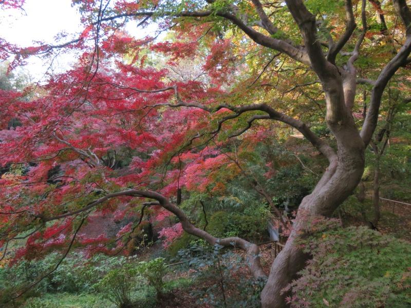 Todoroki Valley Tokyo Autumn Fall 5
