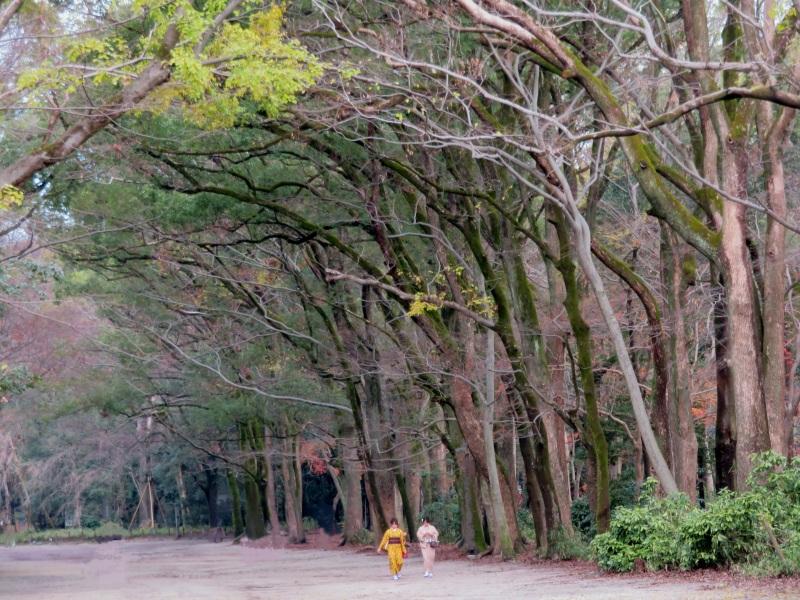 tadasu-no-mori forest kawai-jinja shrine, kyoto 6