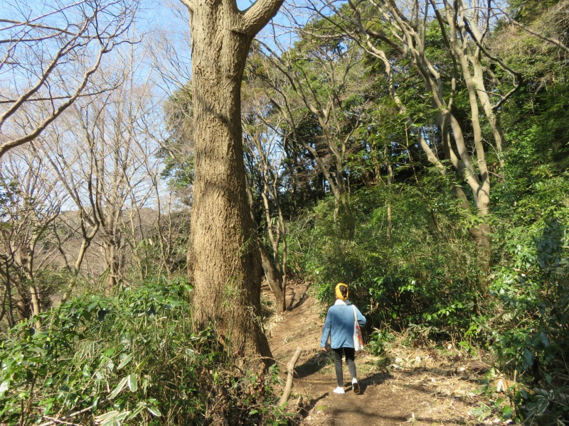Ten-en hiking trail kamakura 14