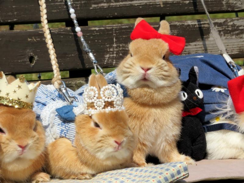 Rabbits dressed up Tokyo 2