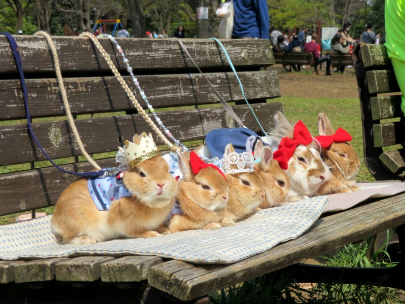 Rabbits dressed up Tokyo