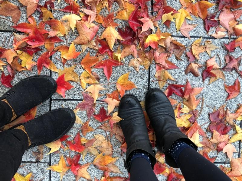 Hiroshima walking rain autumn leaves