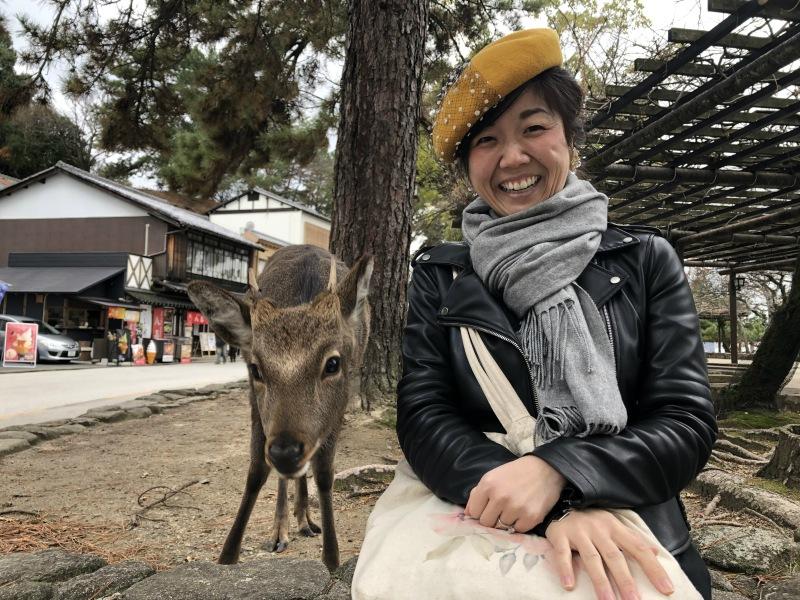 Miyjajima Hiroshima deer 2