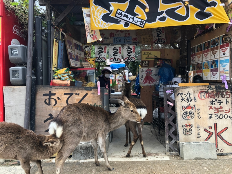 Miyjajima Hiroshima deer into shop