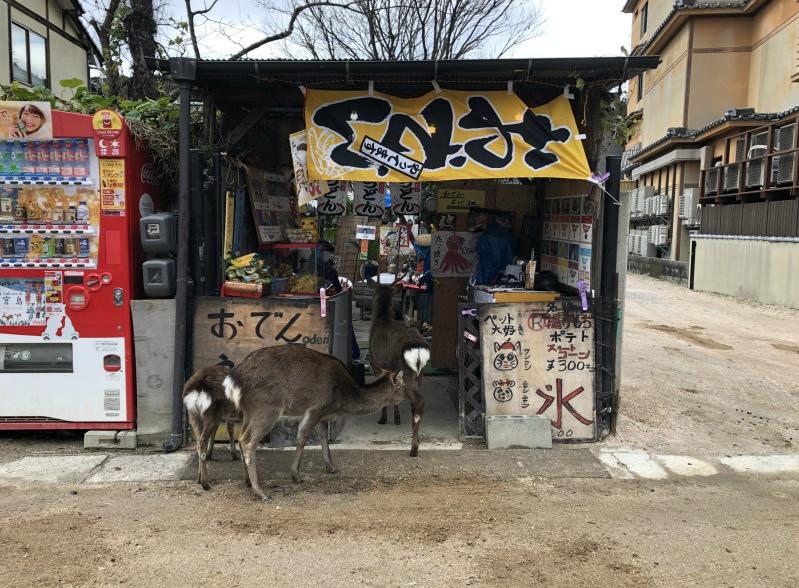 Miyjajima Hiroshima deer shop
