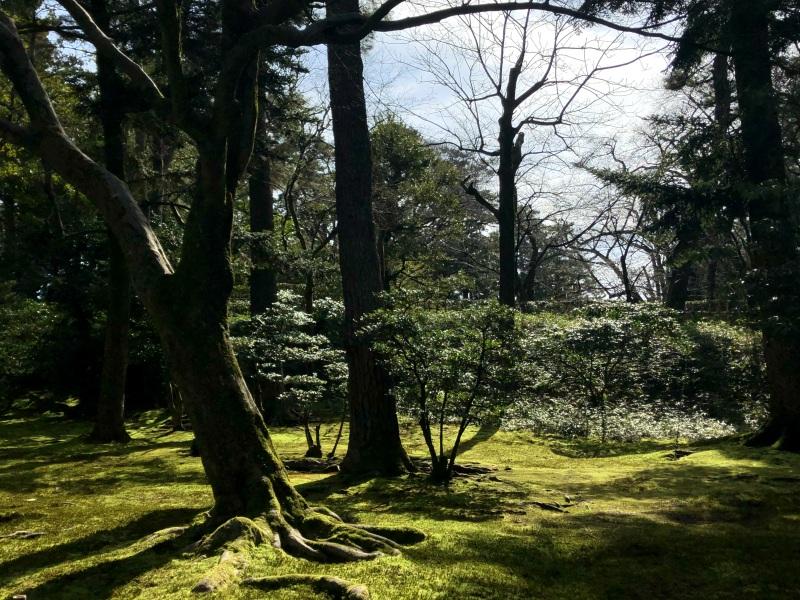 Kenrokuen, Kanazawa sunshine 1