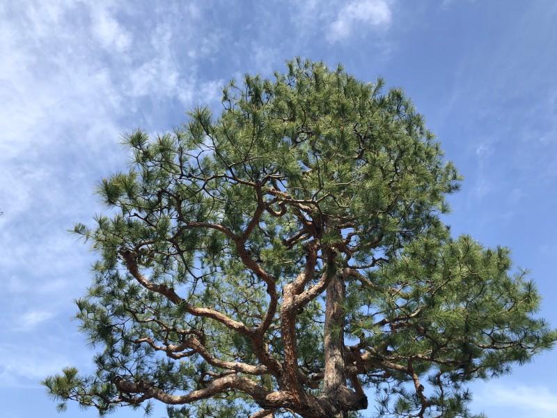 18. Kanazawa trip tree