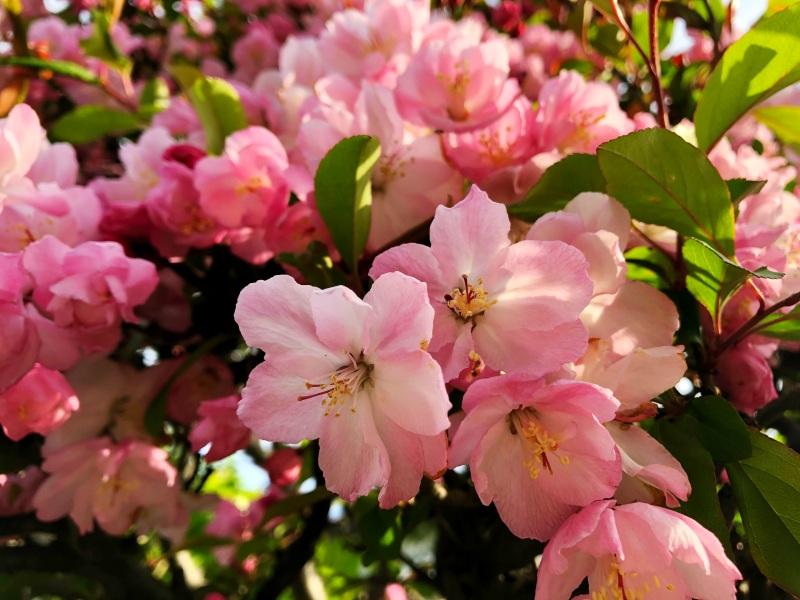 flowers tokyo zen