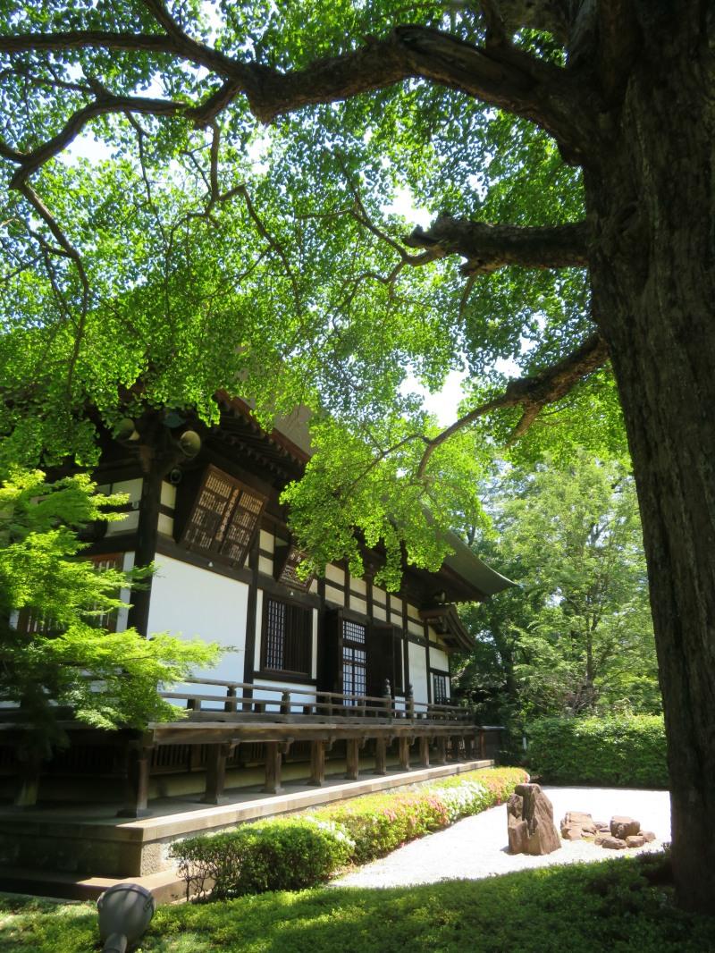 beautiful temple grounds tokyo japan